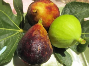Figs3