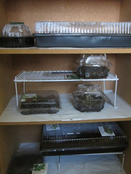 seeds-in-containers