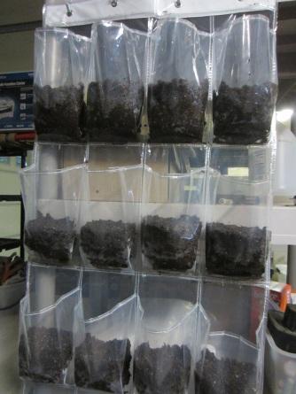 seeds-in-shoebag